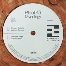 Plant43 – MycologyAC_19